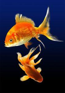 Sternzeichen Fische in der Liebe und Beruf